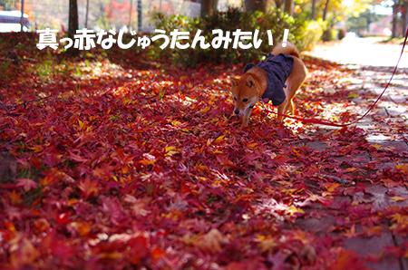 http://blog.cnobi.jp/v1/blog/user/5372066eaa7f42ee290a4176dda1b356/1414979724