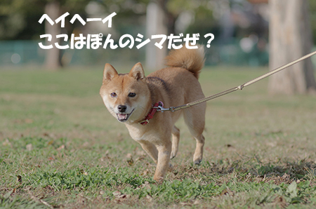 http://file.udon.sakeblog.net/IMGP6783.jpg