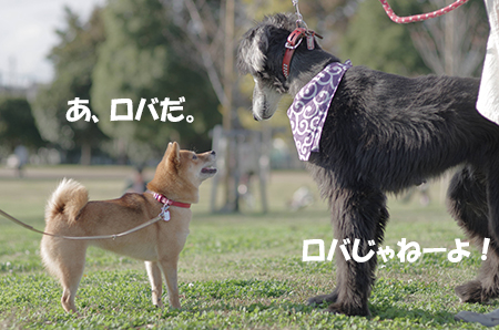 http://file.udon.sakeblog.net/2eafe2d2.jpeg