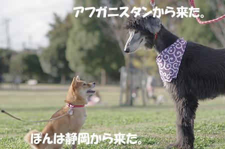 http://file.udon.sakeblog.net/IMGP6803.jpg