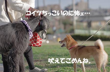 http://file.udon.sakeblog.net/IMGP6805.jpg