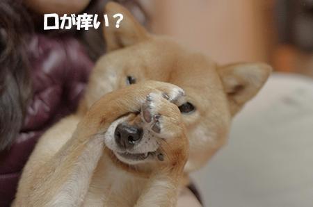 http://file.udon.sakeblog.net/IMGP6816.jpg