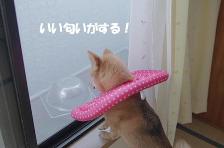 http://file.udon.sakeblog.net/IMGP6852.jpg