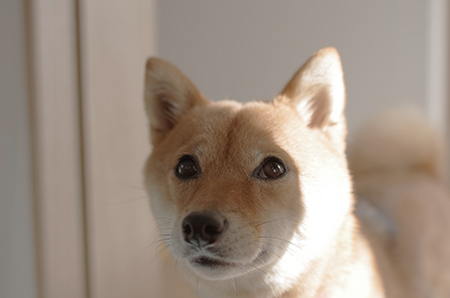 http://blog.cnobi.jp/v1/blog/user/5372066eaa7f42ee290a4176dda1b356/1416229953