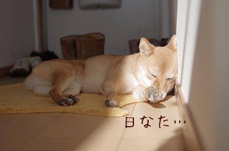 http://file.udon.sakeblog.net/IMGP6878.jpg