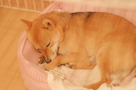 http://blog.cnobi.jp/v1/blog/user/5372066eaa7f42ee290a4176dda1b356/1417001694