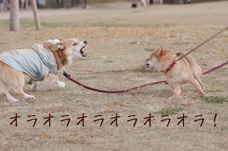 http://blog.cnobi.jp/v1/blog/user/5372066eaa7f42ee290a4176dda1b356/1417320785
