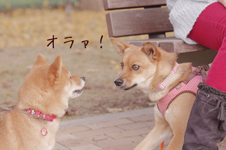 http://blog.cnobi.jp/v1/blog/user/5372066eaa7f42ee290a4176dda1b356/1417320793