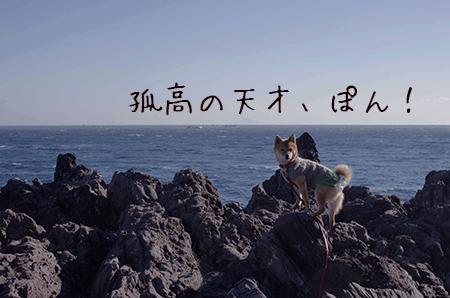 http://file.udon.sakeblog.net/IMGP7057.jpg