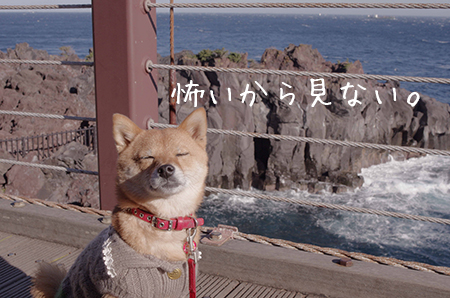 http://file.udon.sakeblog.net/IMGP7053.jpg