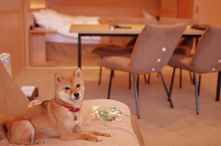 http://file.udon.sakeblog.net/IMGP7160.jpg