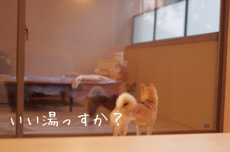 http://file.udon.sakeblog.net/IMGP7173.jpg