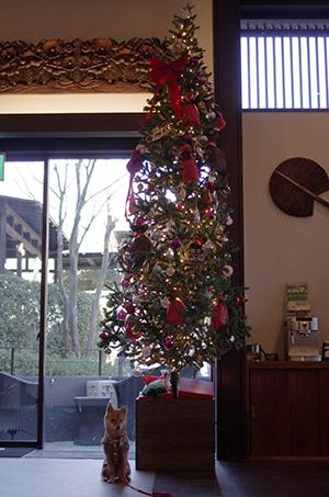 http://file.udon.sakeblog.net/IMGP7065.jpg
