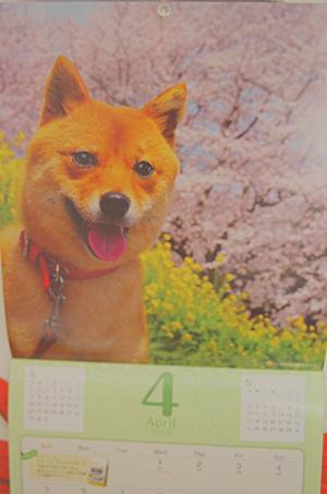 http://file.udon.sakeblog.net/IMGP7409.jpg