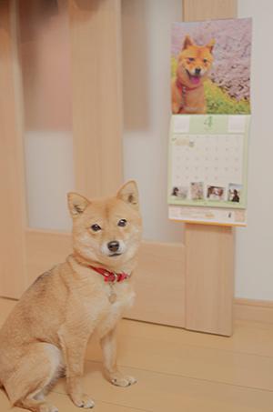 http://file.udon.sakeblog.net/IMGP7411.jpg