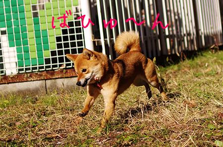 http://file.udon.sakeblog.net/IMGP7533.jpg