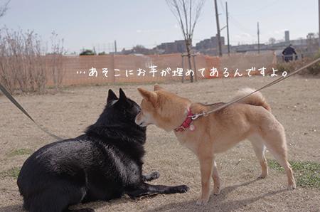 http://file.udon.sakeblog.net/IMGP7483.jpg