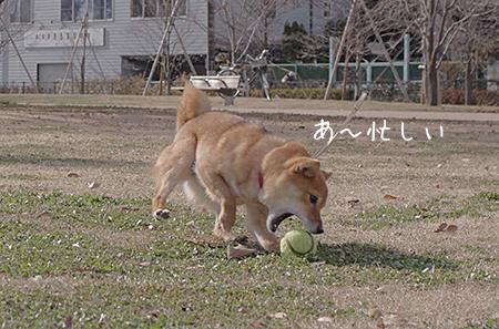 http://file.udon.sakeblog.net/IMGP7470.jpg