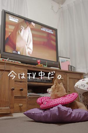 http://file.udon.sakeblog.net/IMGP7501.jpg