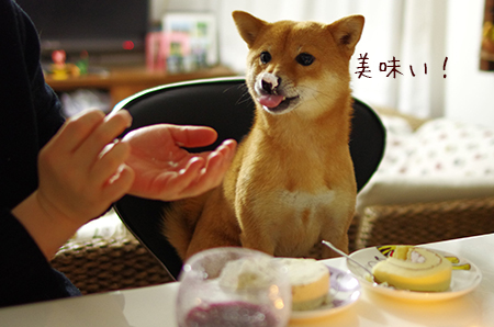 http://blog.cnobi.jp/v1/blog/user/5372066eaa7f42ee290a4176dda1b356/1419422573