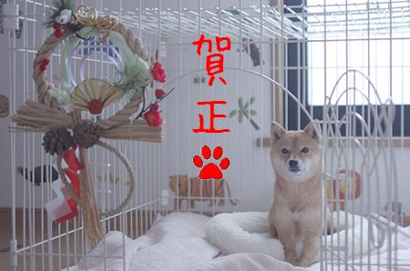 http://blog.cnobi.jp/v1/blog/user/5372066eaa7f42ee290a4176dda1b356/1420275682