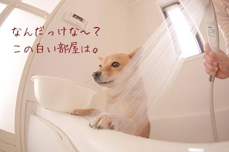 http://blog.cnobi.jp/v1/blog/user/5372066eaa7f42ee290a4176dda1b356/1421032300