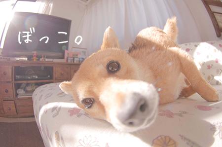 http://file.udon.sakeblog.net/IMGP7808.jpg