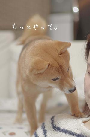 http://blog.cnobi.jp/v1/blog/user/5372066eaa7f42ee290a4176dda1b356/1421327371