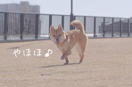 http://file.udon.sakeblog.net/IMGP7859.jpg
