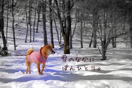 http://file.udon.sakeblog.net/IMGP8078.jpg