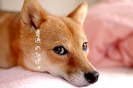 http://file.udon.sakeblog.net/IMGP5808.jpg