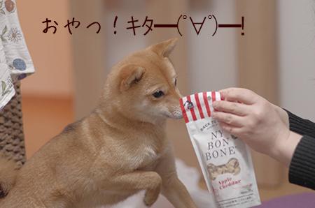 http://file.udon.sakeblog.net/IMGP8313.jpg