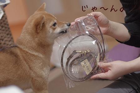http://file.udon.sakeblog.net/IMGP8302.jpg