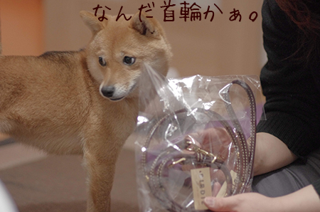 http://file.udon.sakeblog.net/IMGP8301.jpg