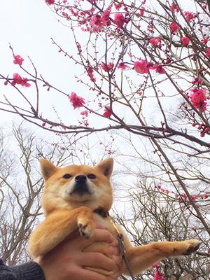http://blog.cnobi.jp/v1/blog/user/5372066eaa7f42ee290a4176dda1b356/1425171042