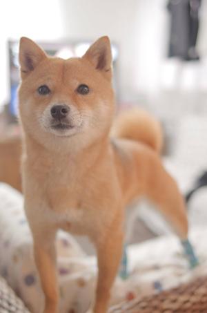 http://file.udon.sakeblog.net/IMGP8474.jpg