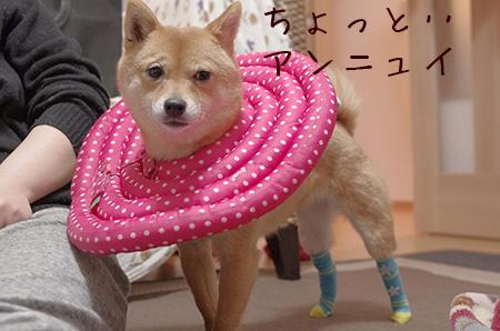 http://file.udon.sakeblog.net/IMGP8499.jpg