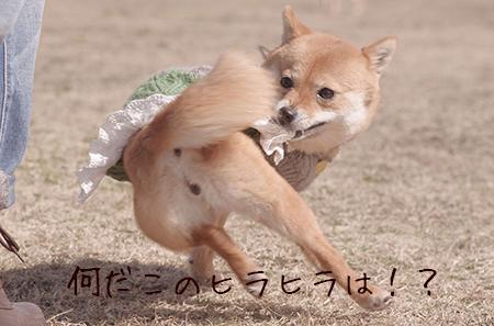 http://file.udon.sakeblog.net/IMGP8669.jpg