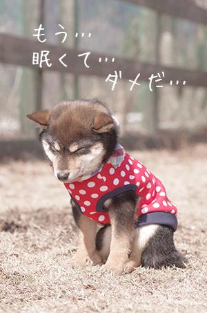 http://blog.cnobi.jp/v1/blog/user/5372066eaa7f42ee290a4176dda1b356/1425876763