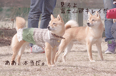 http://blog.cnobi.jp/v1/blog/user/5372066eaa7f42ee290a4176dda1b356/1425876771