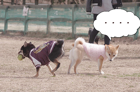 http://file.udon.sakeblog.net/31e93a81.jpeg