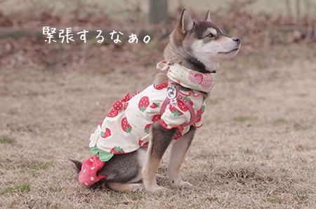 http://blog.cnobi.jp/v1/blog/user/5372066eaa7f42ee290a4176dda1b356/1425876791