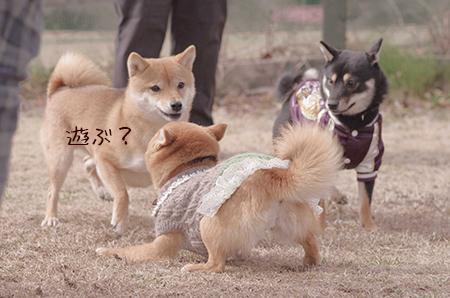 http://blog.cnobi.jp/v1/blog/user/5372066eaa7f42ee290a4176dda1b356/1425876803