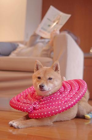 http://blog.cnobi.jp/v1/blog/user/5372066eaa7f42ee290a4176dda1b356/1426167367