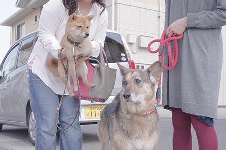 http://file.udon.sakeblog.net/IMGP8890.jpg