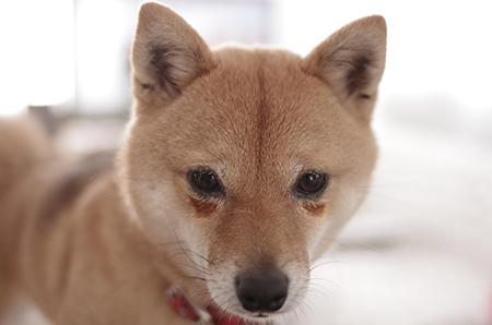http://blog.cnobi.jp/v1/blog/user/5372066eaa7f42ee290a4176dda1b356/1427284745
