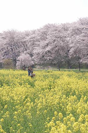http://file.udon.sakeblog.net/IMGP9151.jpg