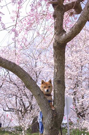 http://file.udon.sakeblog.net/IMGP9140.jpg