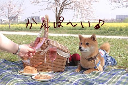 http://file.udon.sakeblog.net/512ae1fa.jpeg