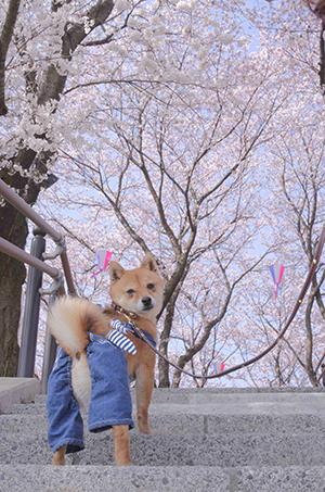 http://file.udon.sakeblog.net/IMGP9064.jpg